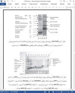 11262-IranArze1