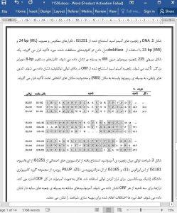 11556-IranArze1